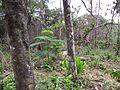 Degradação Florestal Amazônia 36.jpg