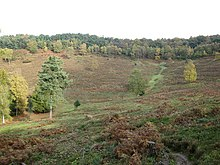 Devil's Punch Bowl, Hindhead Common - geograph.org.uk - 1562464.jpg