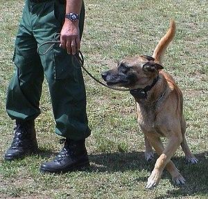 Shock collar - Image: Diensthund