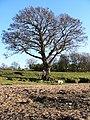 Dinkley - geograph.org.uk - 75047.jpg