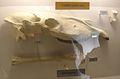 Dinohippus 32.JPG