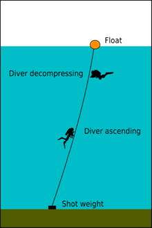 diagram of a shot line showing the weight at the bottom and float at the surface connected by a rope, with a diver ascending along the line and another using the line as a visual reference for position while decompressing.