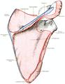 Dixon's Manual of human osteology (1912) - Fig 027.png