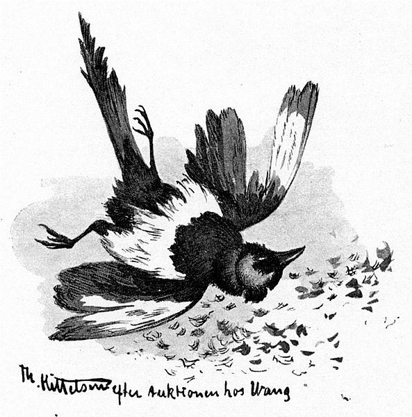 File:Doed fugl - dead bird.jpg