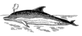 Dolphin 2 (PSF).png