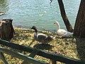 Ducks enjoying the sun.jpg