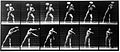 "E. Muybridge ""Animal locomotion"", plate Wellcome L0018592.jpg"