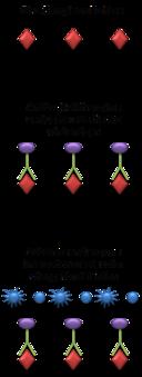 diagram of radioimmunoassay elisa viquip  dia  l enciclop  dia lliure  elisa viquip  dia  l enciclop  dia lliure