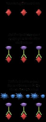 Virus quantification - Wikipedia