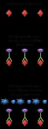 diagram of radioimmunoassay methods and concepts in the life sciences immunoassays  methods and concepts in the life sciences immunoassays