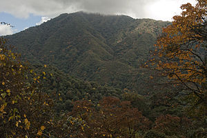 Geography of Arunachal Pradesh - View of Eaglenest forest canopy