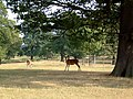 Eastnor Deer Park - geograph.org.uk - 356076.jpg