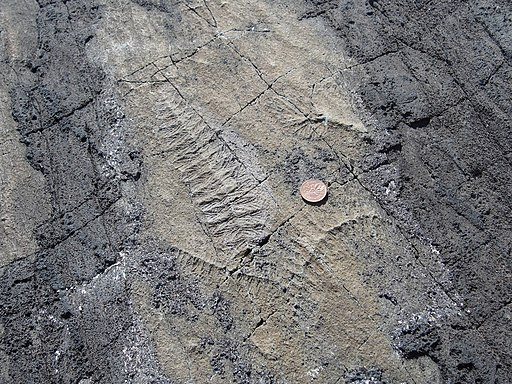 Ediacaran fossils Mistaken Point Newfoundland