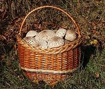 Edible fungi in basket 2019 G3.jpg