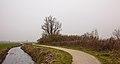 Eenzame wilg (Salix) aan fietspad om Langweerderwielen (Langwarder Wielen). Oostkant 03.jpg
