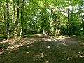 Eichenau Scharwerkholz 201507 694.JPG