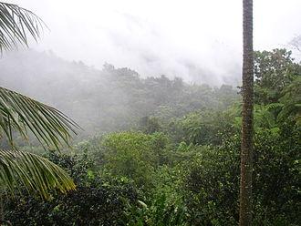 El Yunque (Puerto Rico) - Morning mist in El Yunque rainforest by El Yunque peak