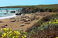 Elephant Seal Rookery (16317334044).jpg