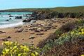 Elephant Seal Rookery (16317334044).jpg