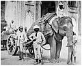 Elephant pulling a field gun in India in 1858.jpg