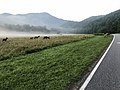 Elk near Oconaluftee Visitor Center--Doug Brinkmeyer (40184499233).jpg
