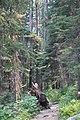 Emerald Lake IMG 5109.JPG