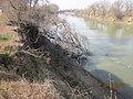 Erosion on Knights Landing levee (9526333324).jpg