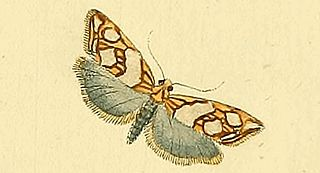 <i>Eugnosta</i> Genus of tortrix moths