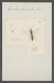 Exochus - Print - Iconographia Zoologica - Special Collections University of Amsterdam - UBAINV0274 046 06 0109.tif