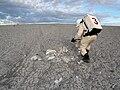 FMARS 2009 gypsum field.jpg