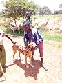 FULANI BOY WITH HIS DOG IN FALGORE FOREST KANO STATE (1).jpg