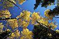 Fall aspens.jpg