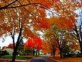 Fall in Madison - panoramio (13).jpg