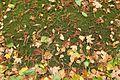 Fallen leaves @ Jardin Pierre-Adrien Dalpayrat @ Paris (30312035874).jpg