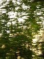 Fast Trees.JPG