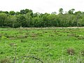 Field in the floodplain of the River Frome - geograph.org.uk - 1869001.jpg