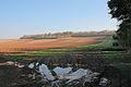 Fields rising to Norton Copse - geograph.org.uk - 333149.jpg