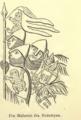 Fig 11 Aarbog for Nordisk Oldkyndighed og Historie 1867.png