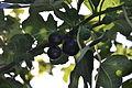 Figs 05.JPG