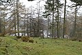 First view of Tarn Hows from behind Rose Castle - geograph.org.uk - 1230798.jpg