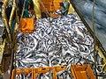 Fish aboard trawler African Queen 5.jpg
