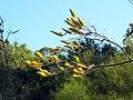 Fleurs jaunes inconnues.JPG