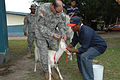 Flickr - The U.S. Army - Medical assistance.jpg