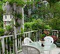 Flickr - brewbooks - Wisteria on our deck (1).jpg