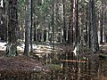 Flooded forest - panoramio.jpg