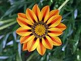 Flower jtca001.jpg