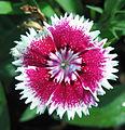 Flowers (57).JPG