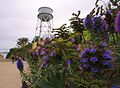 Flowers and the Alcatraz Water Tower.jpg