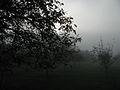 Fog in western france.jpg