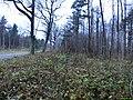 Foliage - panoramio.jpg